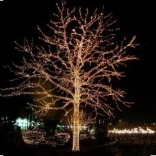 Kıbrıs Ağaç Işıklandırma
