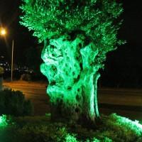 Lüks Trend Ağaç Aydınlatma
