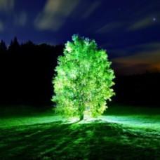 Şehir Tipi Ağaç Aydınlatma