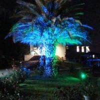 Yeni Model Ağaç Aydınlatma